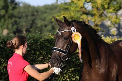 20 Hufeisen Jubiläum Glücksbringer Hochzeit  Geburtstag Pferd Bastler Spieleisen